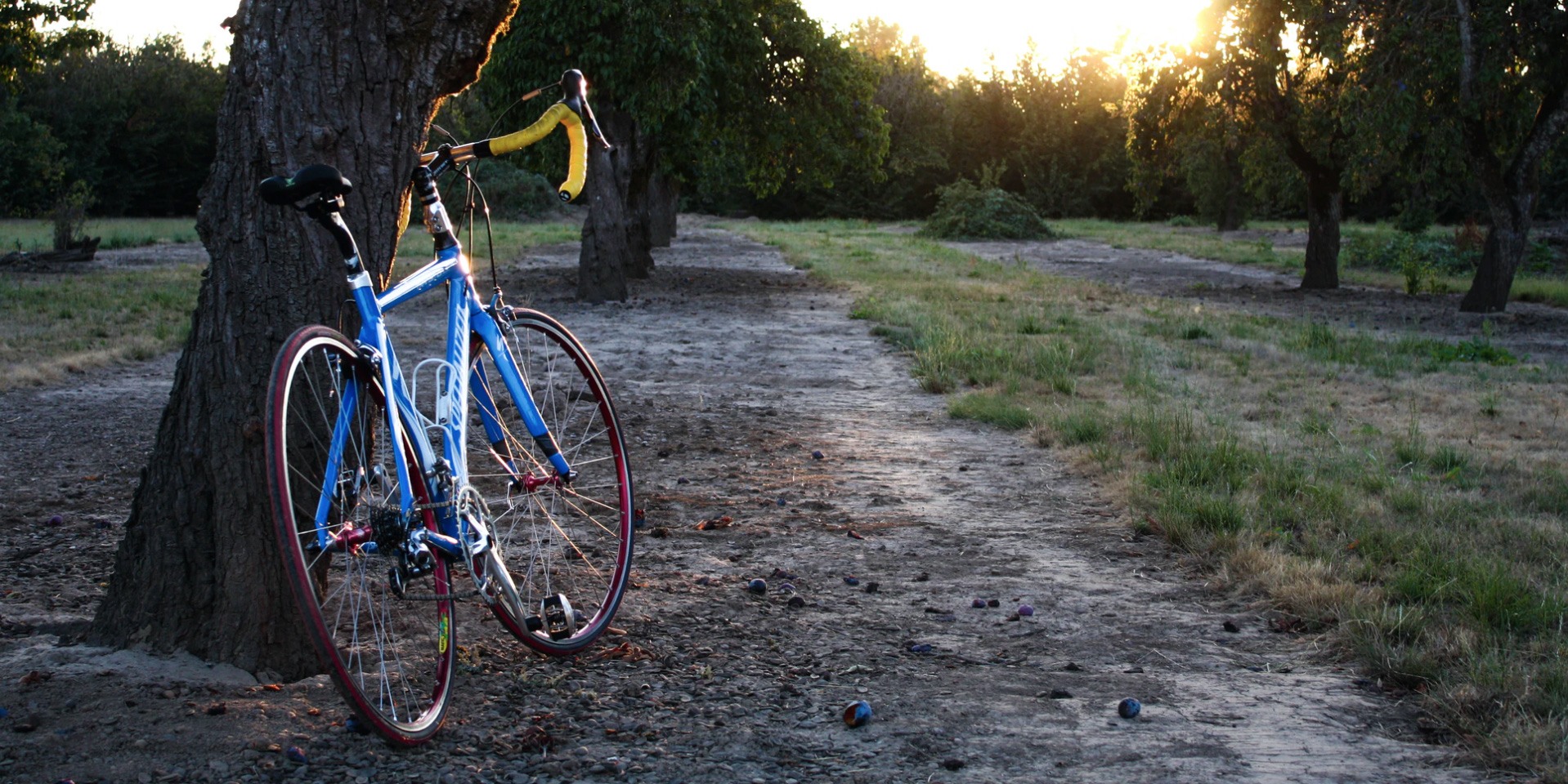 A bike leaning against a tree on a trail.